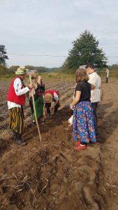 Uczniowie i seniorzy przygotowują się do zbierania ziemniaków na polu.