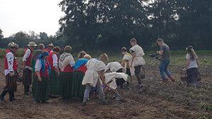 Grupa uczniów i dorosłych z Klubu Seniora zbierają ziemniaki na polu.