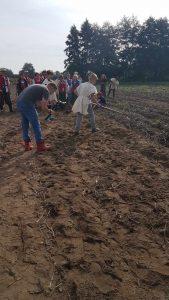 Grupa osób zbiera ziemniaki.